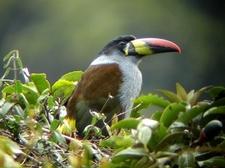 Bird Tours Ecuador