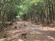 Cat Ba Monkey Island4