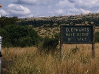 George Rodger Elephants Have Right Of Way 1024x768