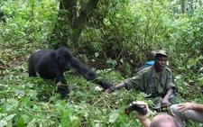 Gorilla Touch Bwindi
