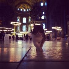 Istanbul Tours Hagia Sophia Cats