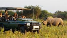 Marataba Safari Lodge Rhino Game Drive