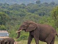 Murchison Falls National