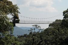 Nyungwe National Park Canopy Walk