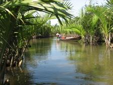 Phong Canh Rung Dua Sinh Thai Bay Mau