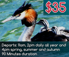 See The Queenstown Birdlife Doing One Of Our Queenstown Lake Cruises
