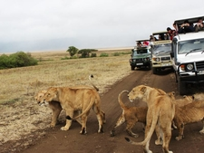 Acquire Adventures Safaris Masai Mara
