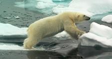 Arctic 34573