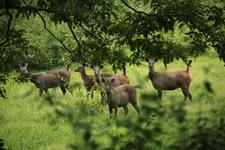 Deers Parambikulam 631