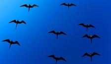 Galapagos Ecuador Wildlife Spectacular 38513