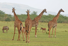 Lake Manyara Wildlife