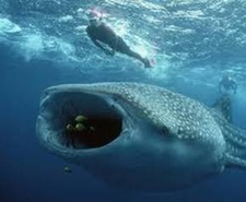 Best Of Whale Shark 3