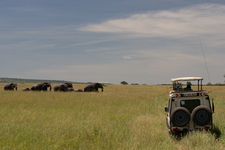 Game In Serengeti