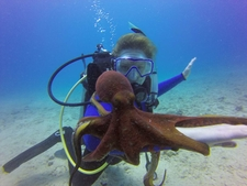 Hawaii Scuba Diving 76