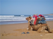 Morocco Planet Camels