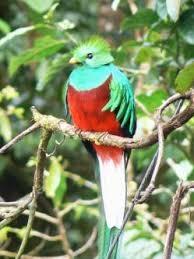 Quetzal Foto