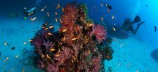 Similan Diving Safaris 2divers Coral
