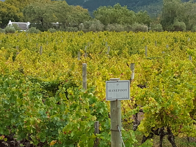 Winelands Full Day Tour Grande Provence
