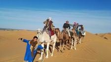 Camel Rides In Sahara Desert