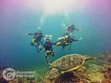 Divers Thai Turtle