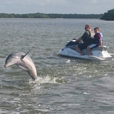 Dolphin Jumping On Tour