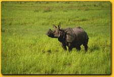 Wildlife Tour Kaziranga
