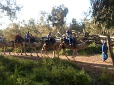 DAR SOUSS CAMEL/ THOMSON TUI