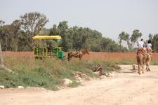 DAR SOUSS/Camel & Caleche