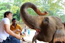 Pinnawala Elephant Orphanage 3