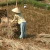 Farmer In Quảng Ngãi Province