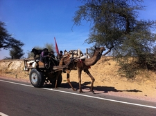 Rajasthan Visit