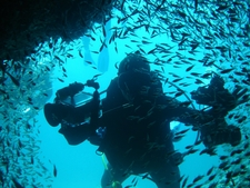 Diving In To The Marine Reserve