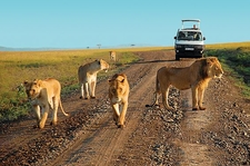 Game Drive At Tsavo East National Park