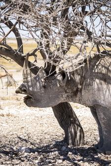 Rhino Yoga Safari Namibia