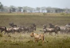 Serengeti 8