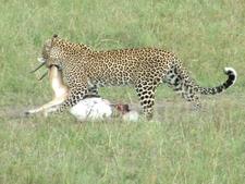 Tsavo National Park East 1