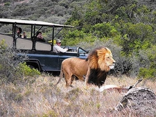 Establishments682x512 25602455 Safari Lodge On Amakhala 1