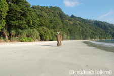 Havelock Island 22
