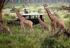 8daymarabeach Giraffe Spotting