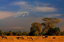 Beautiful Mount Kilimanjaro And National Park Tour