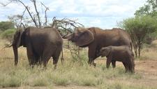 Dsc4708elefanten