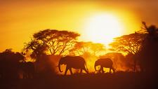 Elephants Addo Elephant