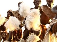 Zulu Warriors South Africa