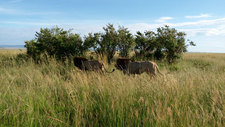 Masai Mara 8