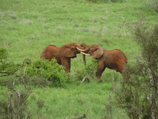 Elephants - Lumo Santuary