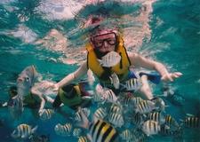 Reef Snorkeling 377390 1920