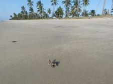 Turtles Beach