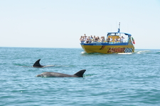 Caves Dolphin Watching Tour Albufeira Algarve 1