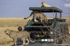 Photo Safari Exposuretours 42