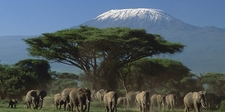 Tavernsolia Prime Safaris Tours K Amboseli National Park